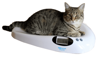 Cat on MTB Veterinary Scale