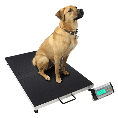 Dog Weighing on Platform Scales