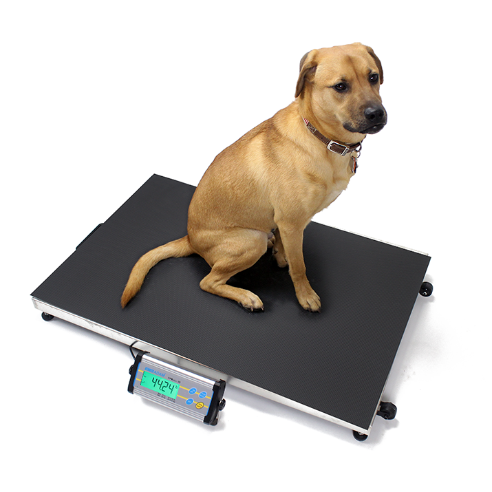 Vet Scales For Pet Amp Animal Weighing Adam Equipment Usa